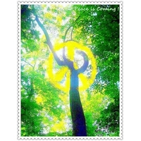 The trippy peace tree lg